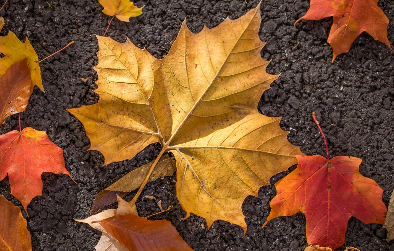 Photo wallpaper autumn, leaves, macro