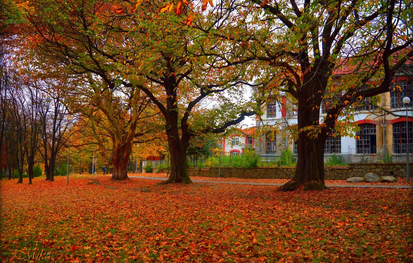 Photo wallpaper Autumn, Trees, The building, Fall, Foliage, Autumn, Building, Trees, Leaves