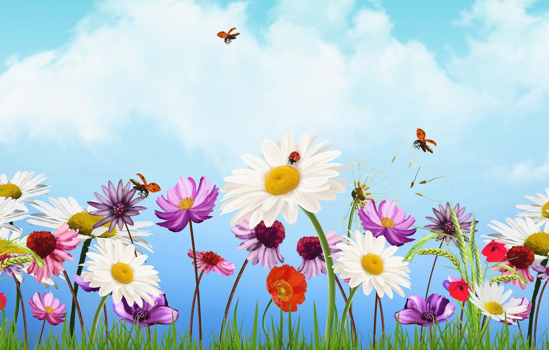 Photo wallpaper the sky, flowers, Maki, chamomile, ears, ladybugs, kosmeya