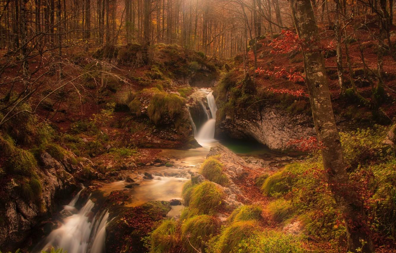 Photo wallpaper autumn, forest, trees, stream, stones, moss