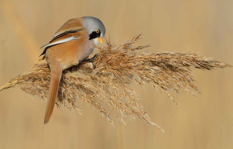 Photo wallpaper background, bird, reed