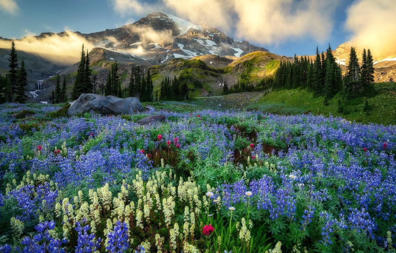 Photo wallpaper mountains, Washington, Mount Rainier, wildflowers