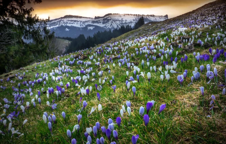 Photo wallpaper spring, Switzerland, The Canton Of Bern, Emmental