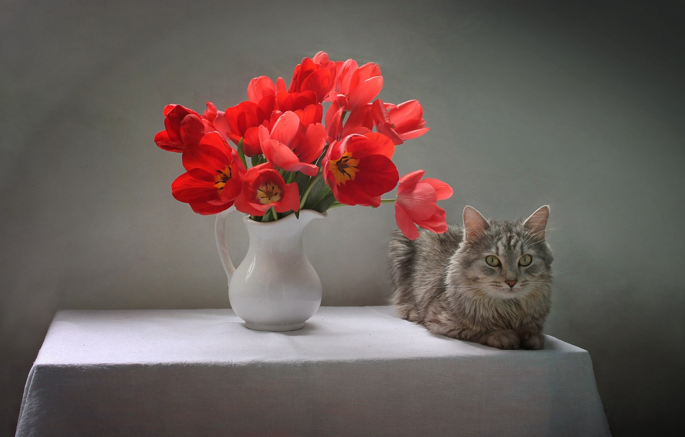 Photo wallpaper cat, cat, flowers, table, animal, tulips, pitcher, tablecloth, Kovaleva Svetlana, Svetlana Kovaleva