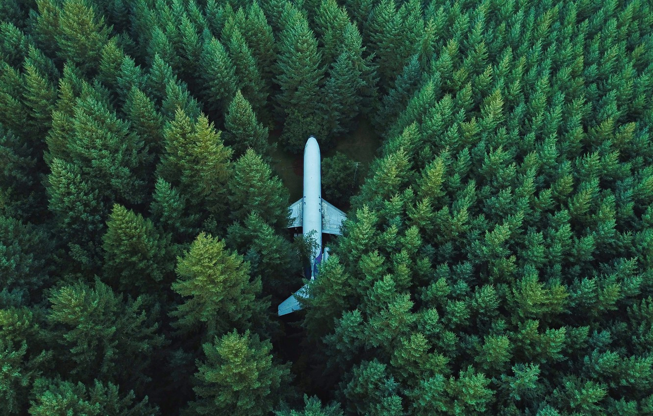 Photo wallpaper greens, trees, the plane, Forest