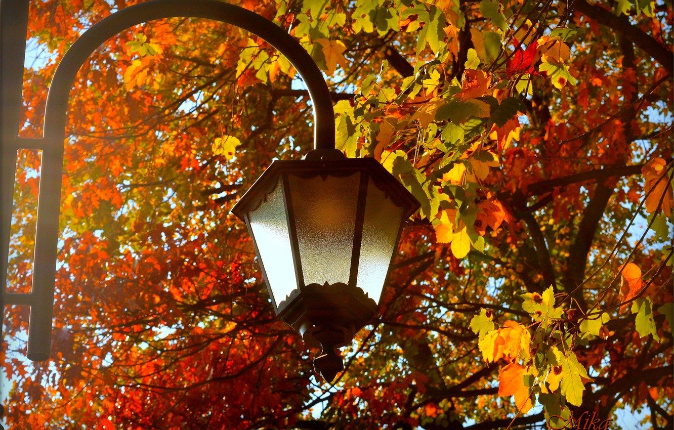 Photo wallpaper Autumn, Leaves, Lantern, Fall, Autumn, Leaves