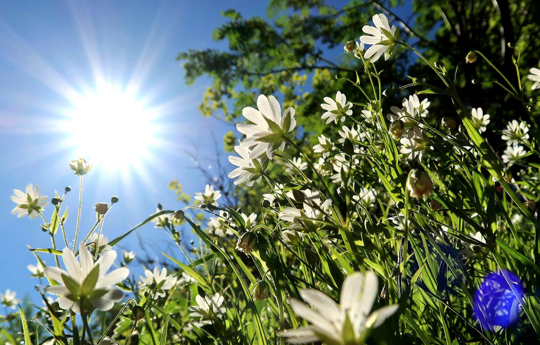 Photo wallpaper summer, the sky, grass, the sun, flowers