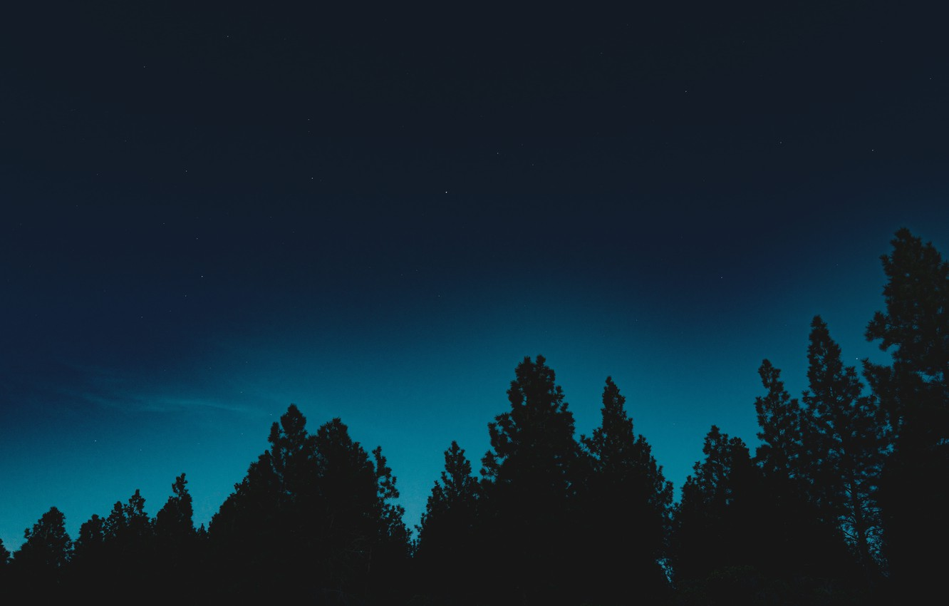 Photo wallpaper forest, the sky, stars, trees, night, nature