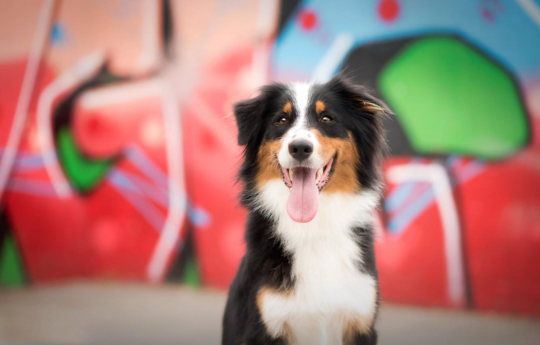 Photo wallpaper look, each, dog