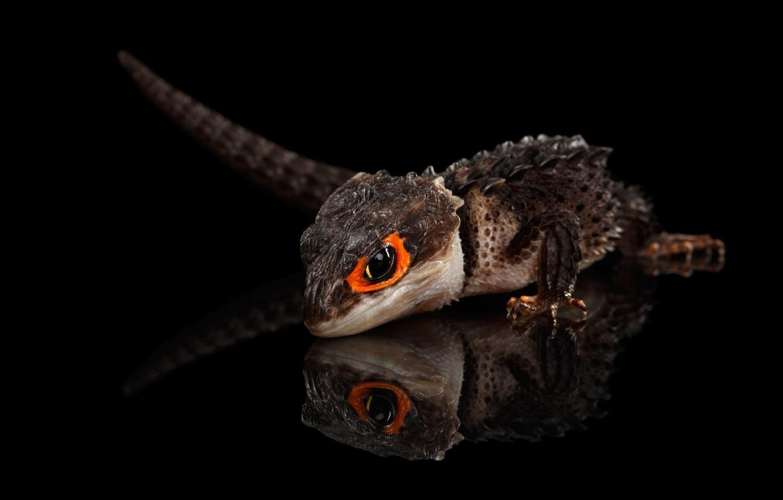 Photo wallpaper lizard, scales, big eyes