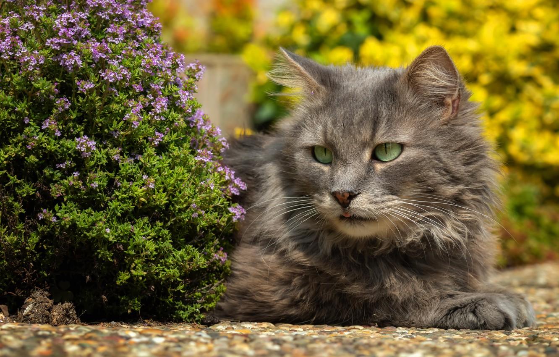 Photo wallpaper cat, cat, flowers, nature, portrait