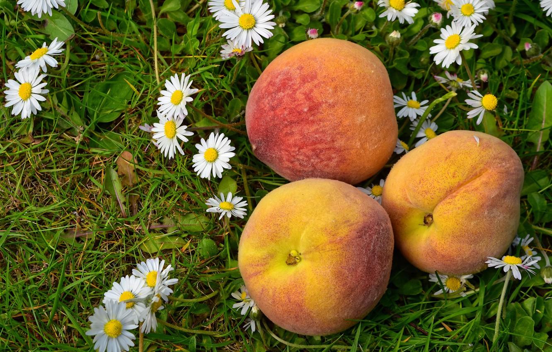 Photo wallpaper grass, flowers, glade, food, chamomile, harvest, three, fruit, white, trio, peaches, Daisy, three peaches