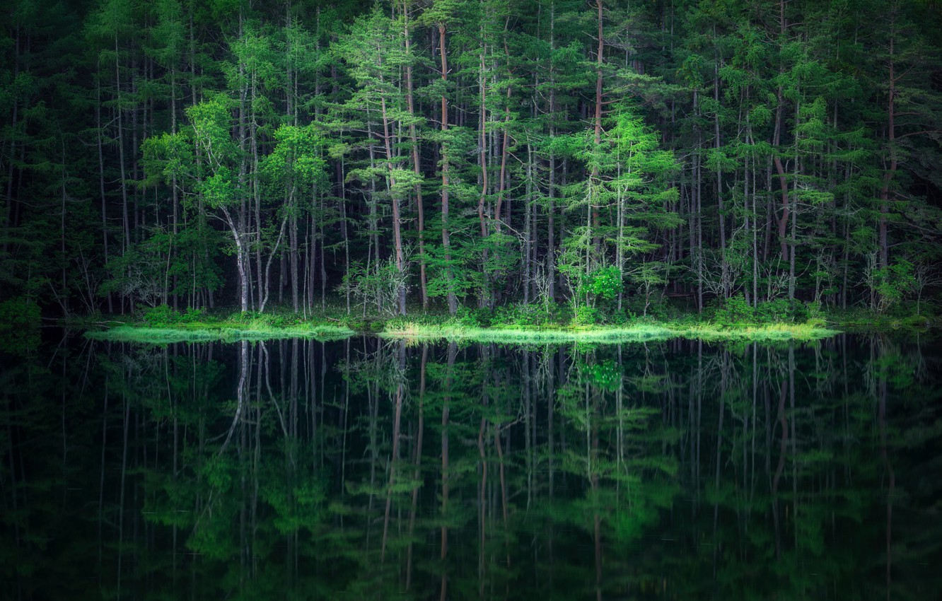Photo wallpaper forest, water, reflection, forest, water, reflection, Takeshi Mitamura