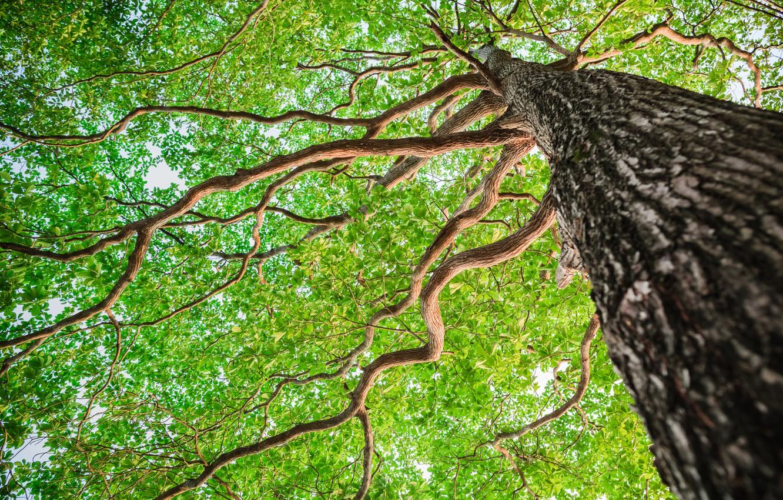 Photo wallpaper forest, tree, bark