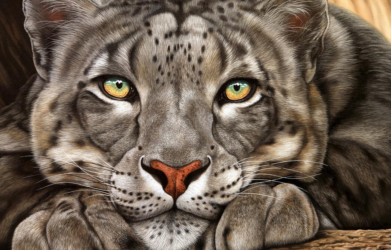 Photo wallpaper look, face, animal, IRBIS, snow leopard
