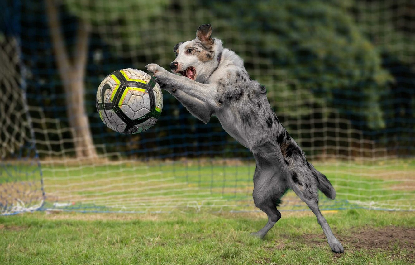 Photo wallpaper football, the game, the ball, dog