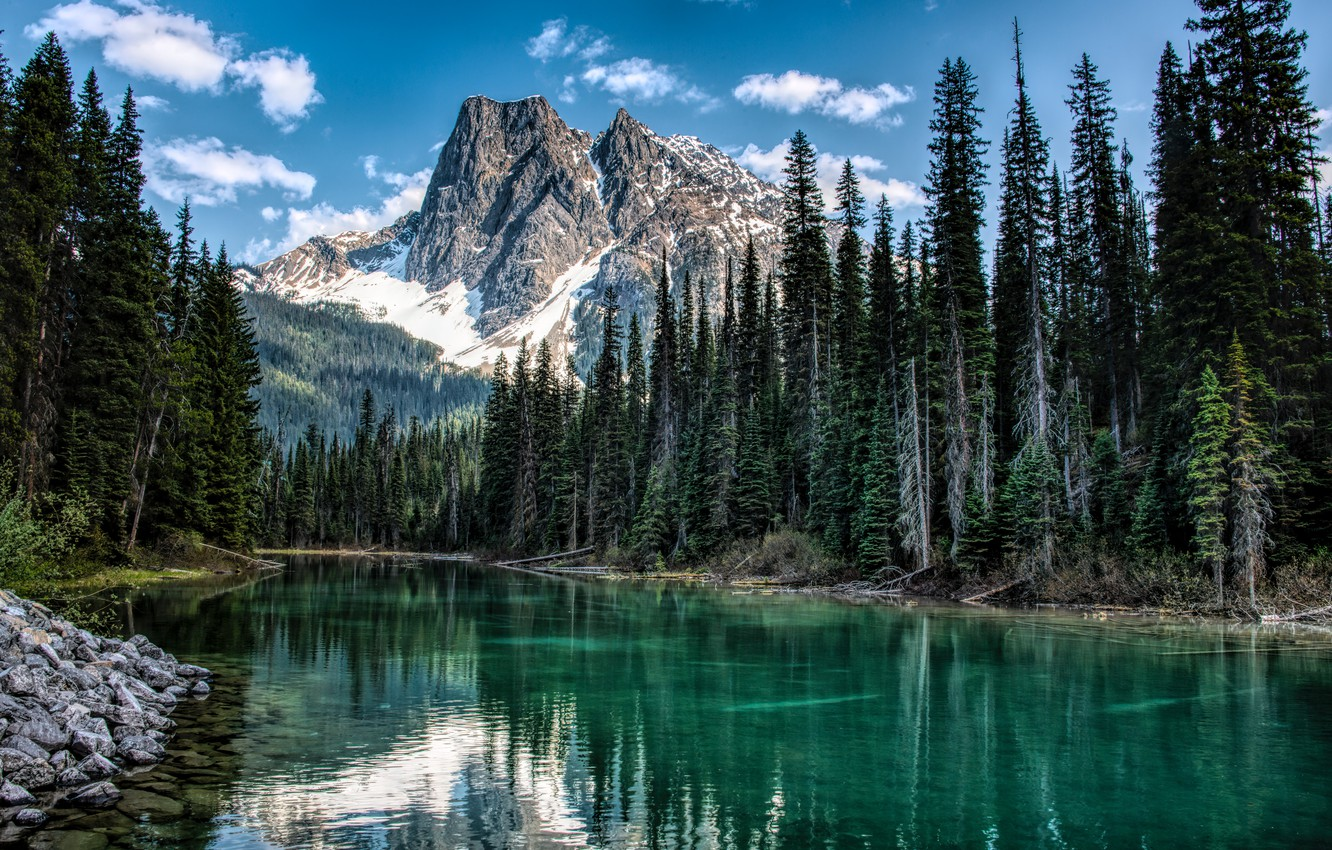 Photo wallpaper forest, trees, landscape, mountains, nature, river