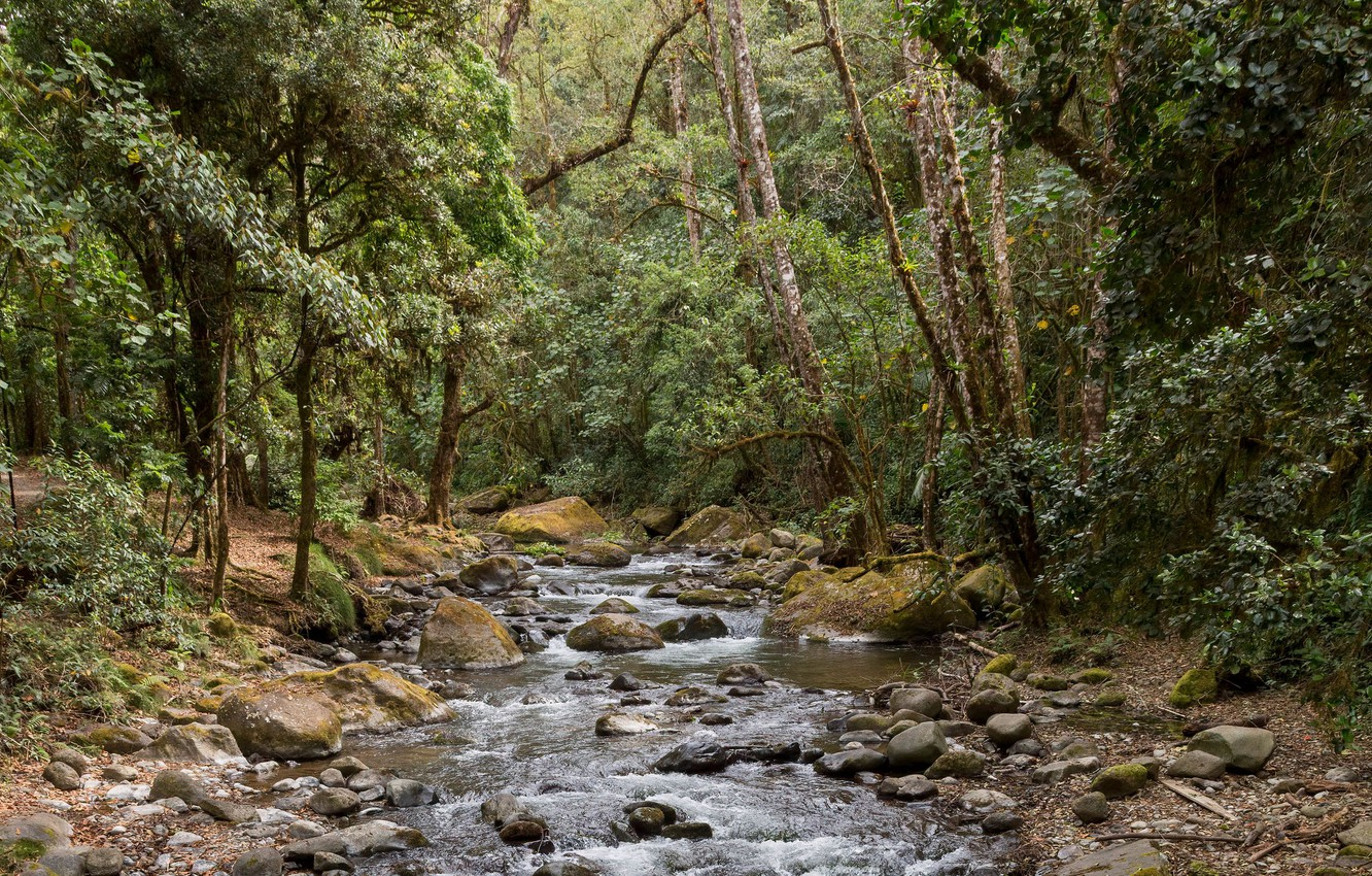 Photo wallpaper forest, trees, nature, river, stones, stream
