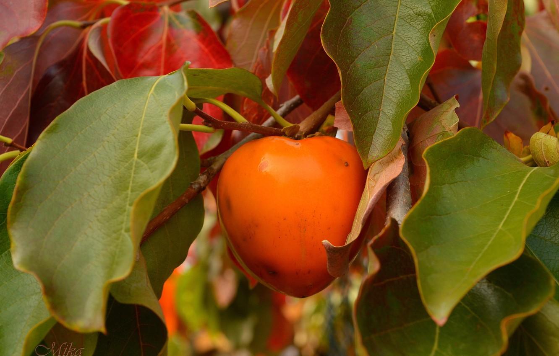 Photo wallpaper Branch, Fruit, Wren