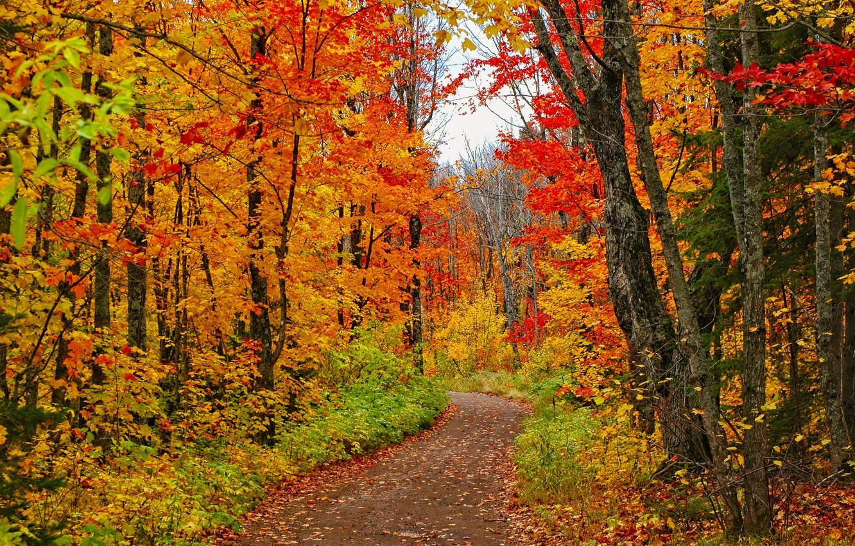 Photo wallpaper road, forest, trees, photo, USA, path, Minnesota
