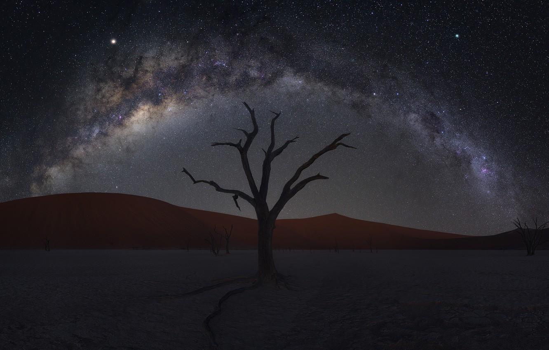 Photo wallpaper sand, tree, desert, dunes, desert, Namibia, tree, sand, Namibia, dunes, Zhu Xiao