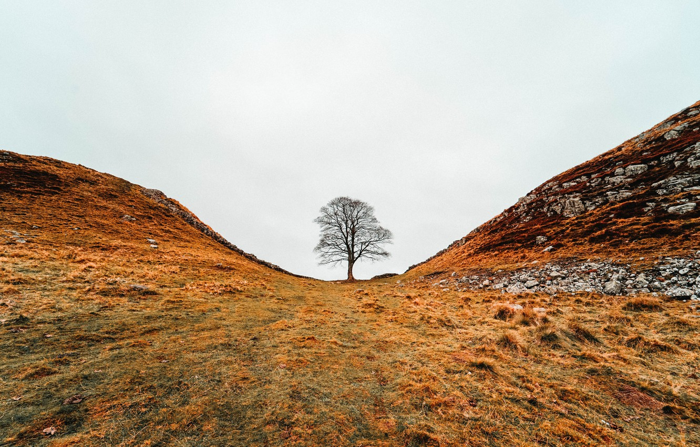 Photo wallpaper nature, tree, hills, valley, late autumn