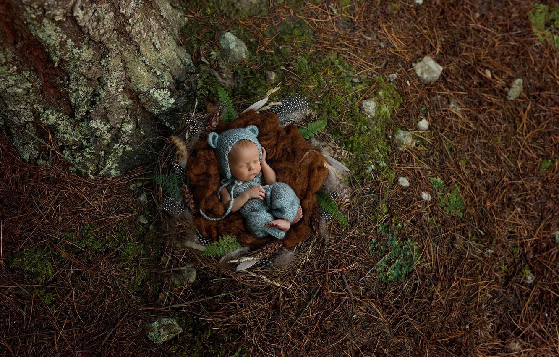 Photo wallpaper sleep, feathers, socket, needles, baby, child, sleep, baby