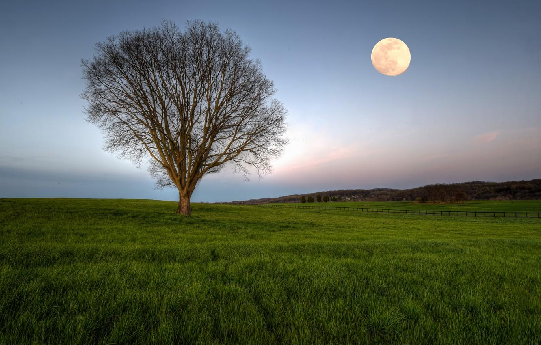 Photo wallpaper field, tree, the moon