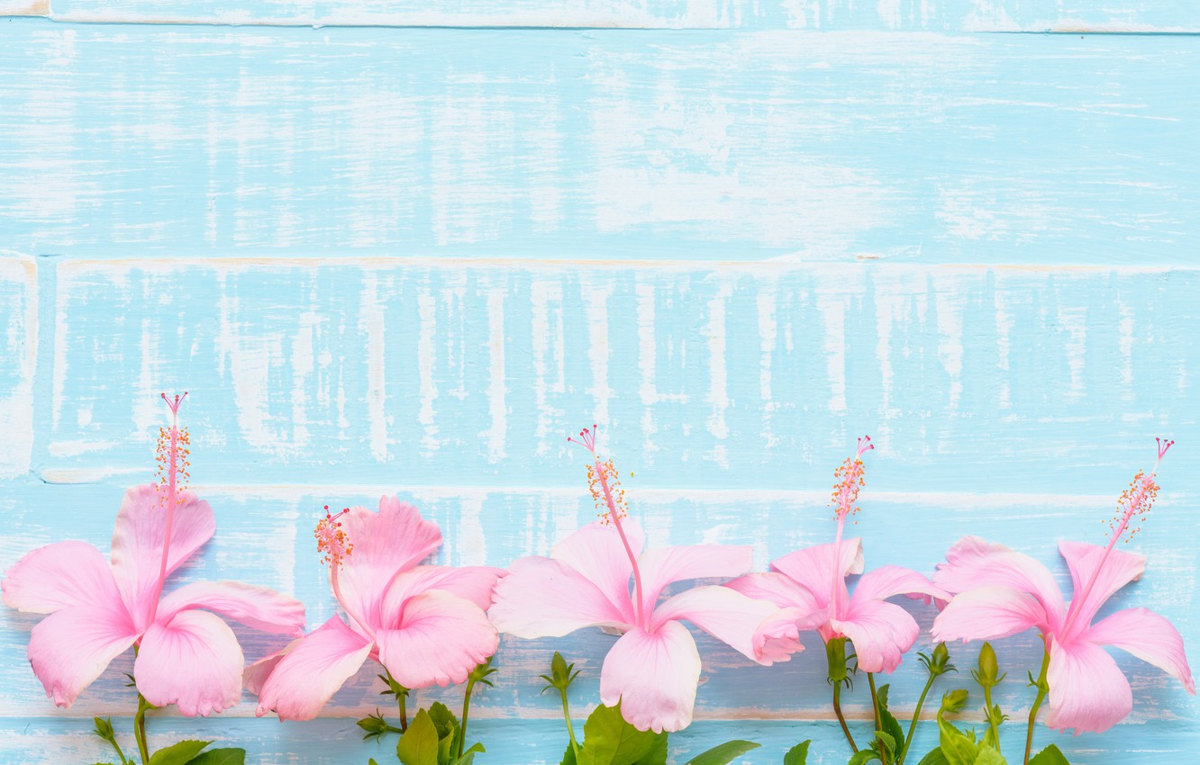Wallpaper Flowers Background Pink Blue Wood Blue Pink