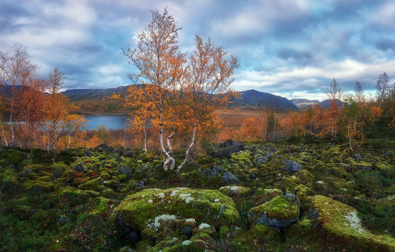 Photo wallpaper nature, stones, birch