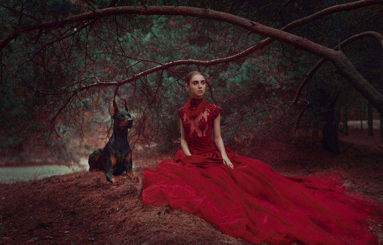 Photo wallpaper forest, girl, branches, style, dog, dress, pine, red dress, Doberman, Anastasia Dobrovolskaya