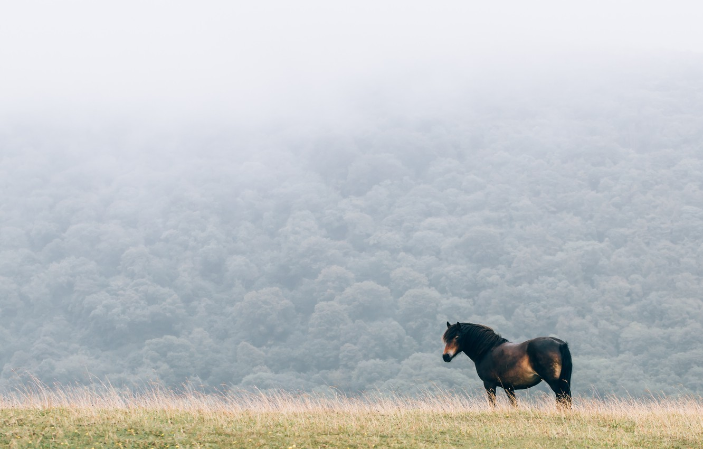 Photo wallpaper field, fog, horse, mane
