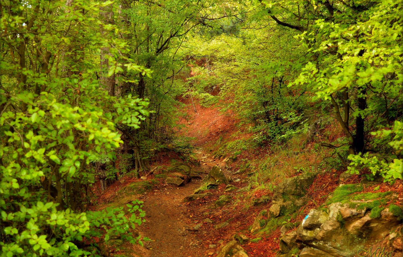 Photo wallpaper Path, Trees, Forest, Forest, Trees