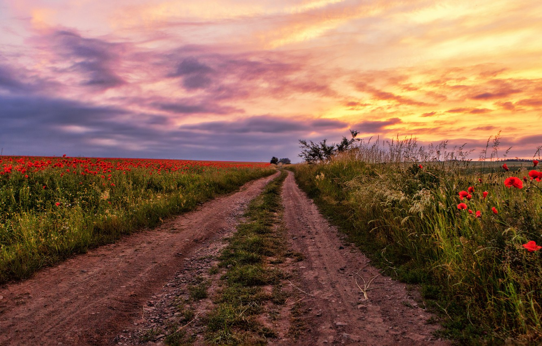 Photo wallpaper road, field, summer