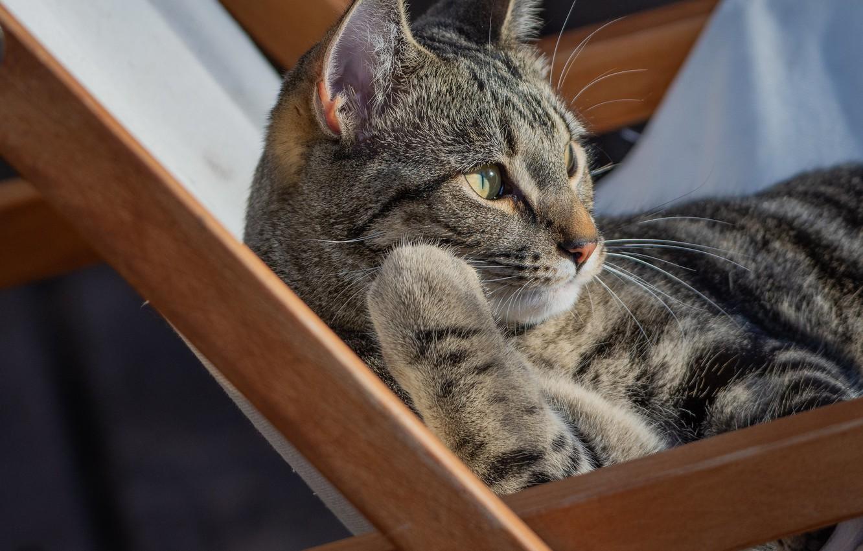 Photo wallpaper cat, cat, stay, chair, cat
