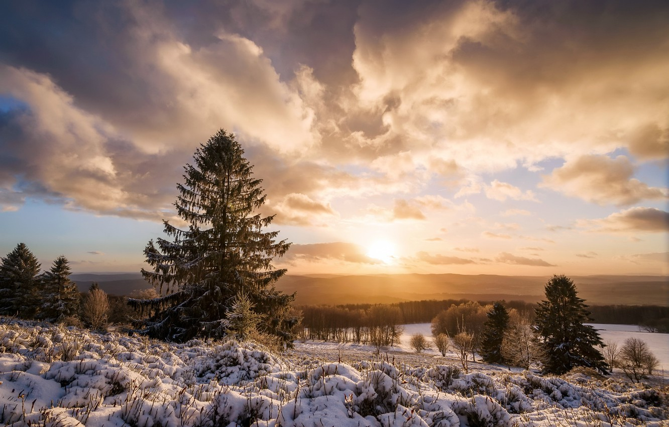 Photo wallpaper winter, forest, morning