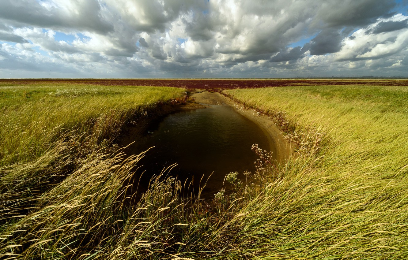 Photo wallpaper field, the sky, puddle