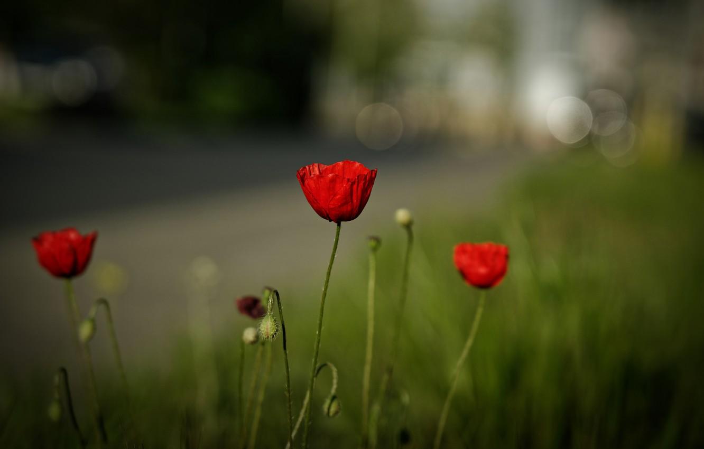 Photo wallpaper road, summer, grass, flowers, glade, Mac, Maki, red, bokeh, blurred background