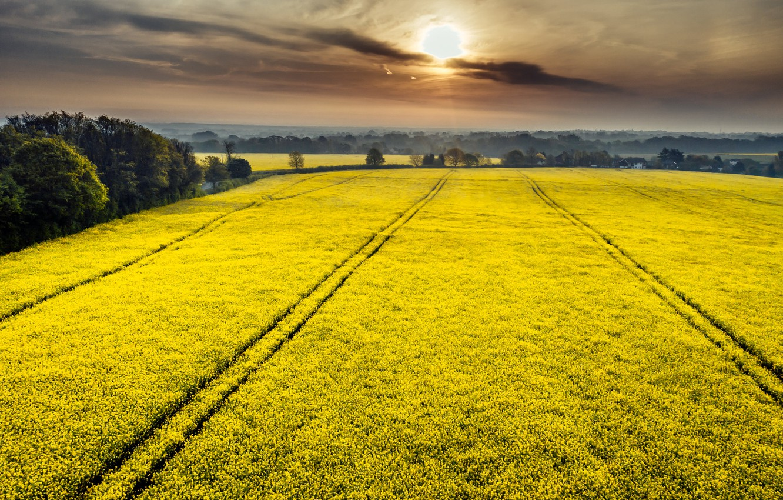 Photo wallpaper field, summer, sunset, fog, rape