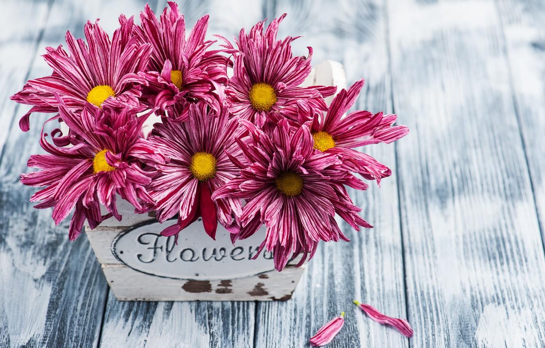 Photo wallpaper flowers, bouquet, chrysanthemum, Purple