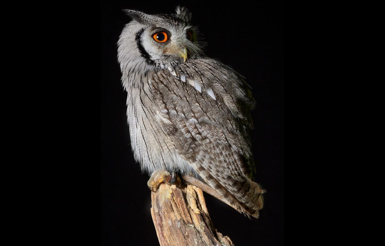 Photo wallpaper owl, bird, stump