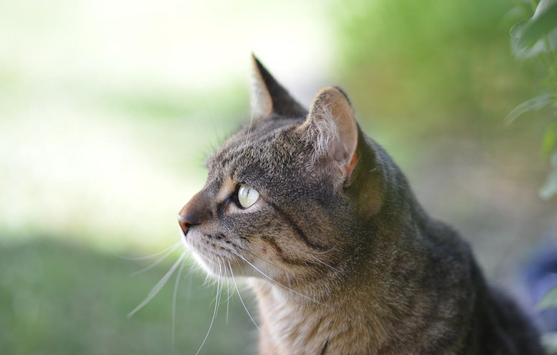 Photo wallpaper Cat, Profile, Kit Kitten