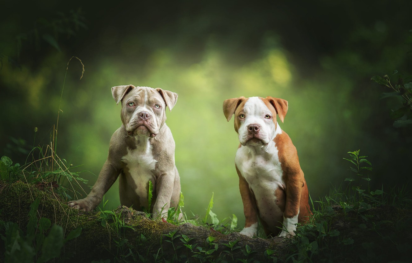 Photo wallpaper dogs, look, leaves, nature, pose, puppies, pair, log, a couple, Duo, two, green background, faces, …