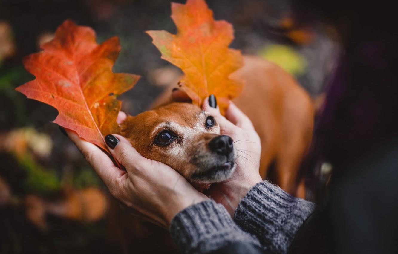 Photo wallpaper autumn, each, mood, dog