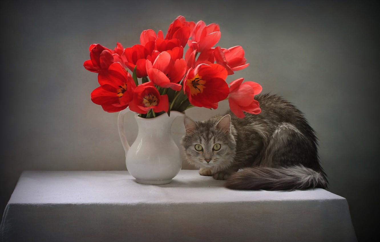 Photo wallpaper cat, cat, look, flowers, pose, table, animal, tulips, pitcher, tablecloth, Kovaleva Svetlana, Svetlana Kovaleva