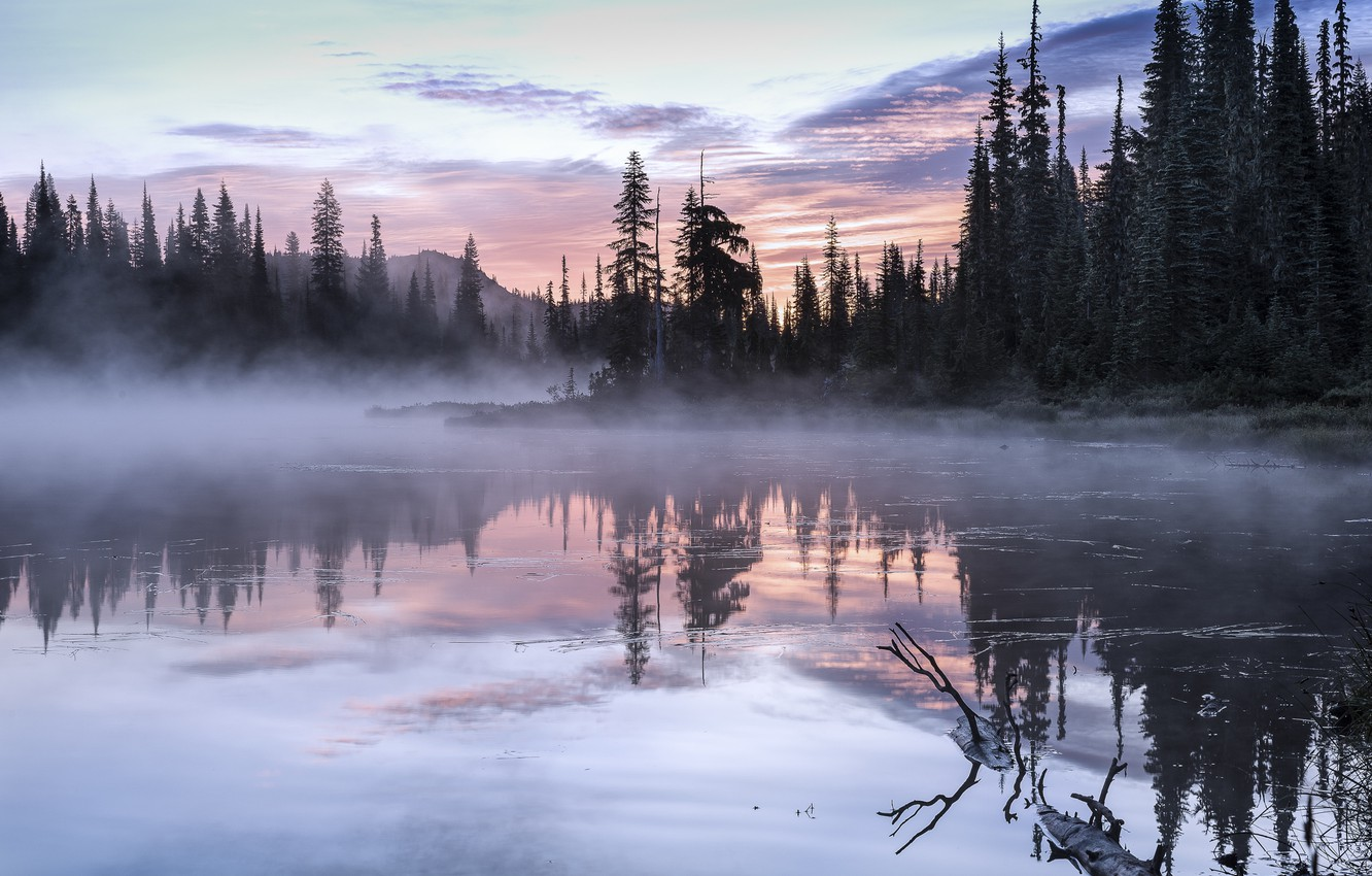 Photo wallpaper trees, landscape, nature, fog, lake, morning, USA, Olympic, national Park, National Park, Olympic
