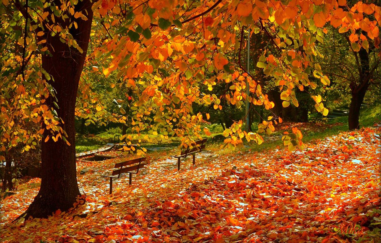 Wallpaper Autumn Fall Foliage Autumn Falling Leaves