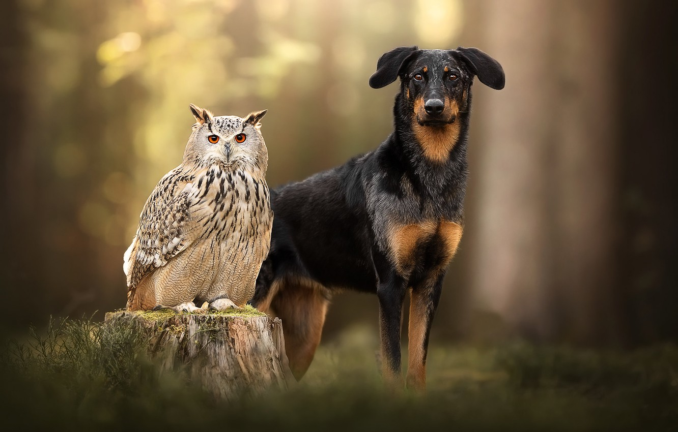Photo wallpaper owl, bird, stump, dog, bokeh, owl