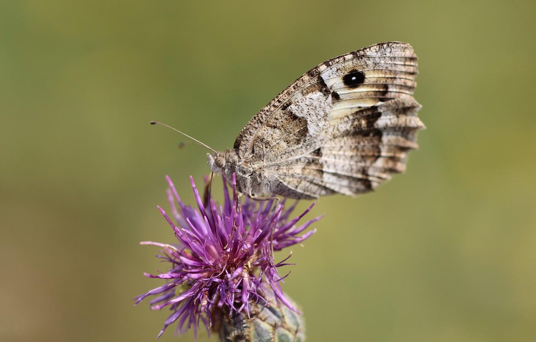 Photo wallpaper flower, background, butterfly