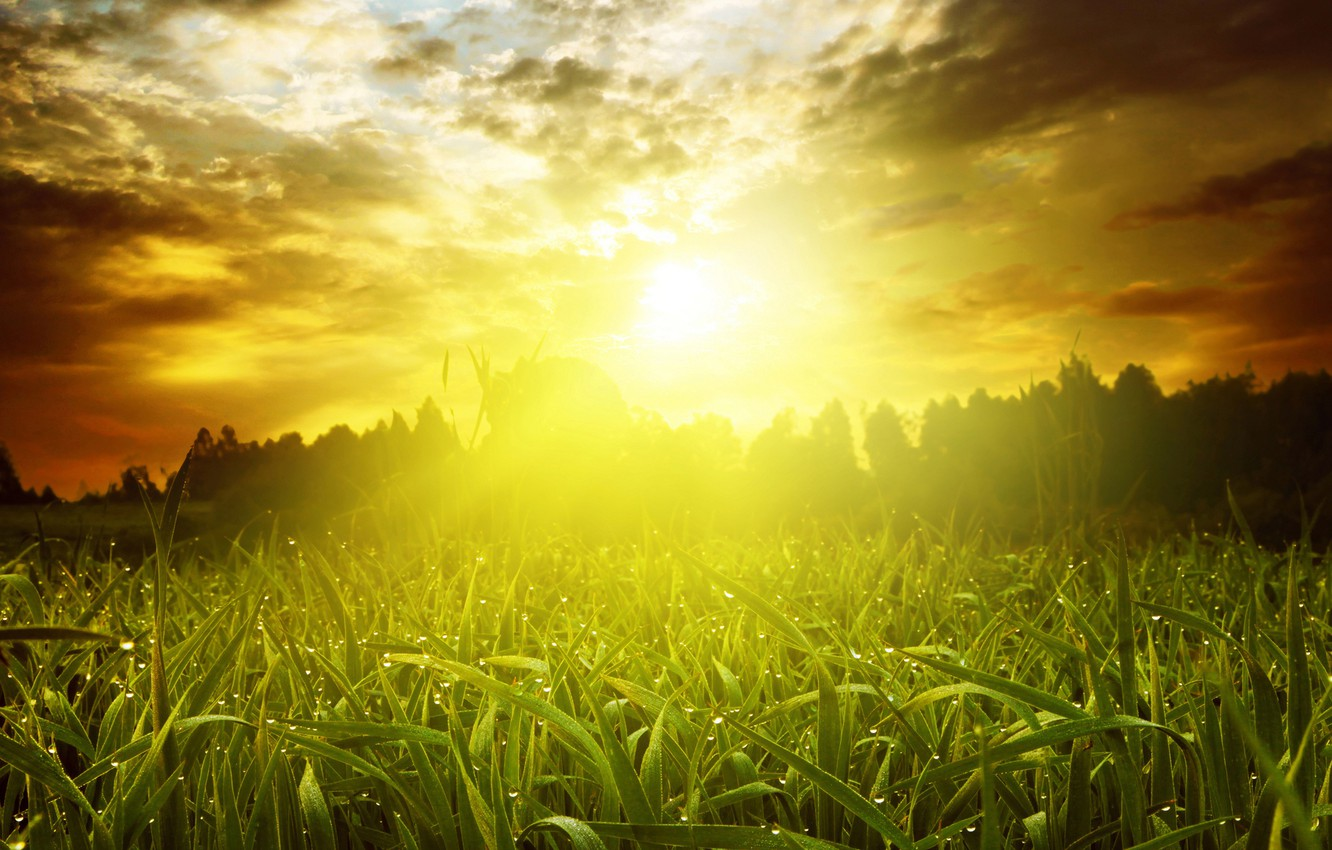 Photo wallpaper greens, field, summer, the sky, grass, the sun, clouds, rays, trees, Rosa, dawn, morning